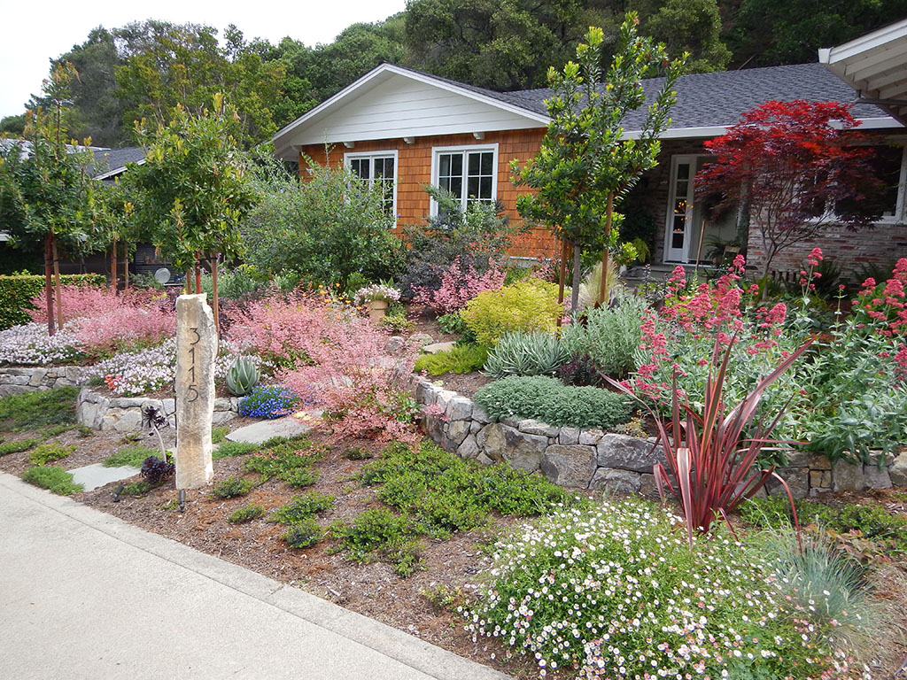 Planting - California Natives - NV Professional Landscaping Landscape Landscaping Design